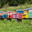 Foto Stock: Colorful Beehives on meadow