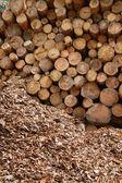 Un tas de bûches de bois — Photo