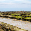 Oyster beds offshore the channel island of Jersey, UK — Stock Photo