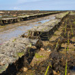 Oyster beds offshore the channel island of Jersey, UK - Stock Photo