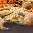 Fresh Crabs — Stock Photo