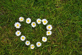 Heart made from Daisy Flowers on a lawn — Stock Photo