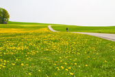 Spring meadow with cyclist and country road — Stock Photo