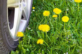 Car wheel crossing a spring meadow — Stock Photo