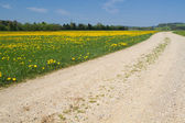 Spring meadow with country road — Stock Photo
