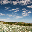 Onionfield in Italy - 