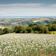 Onionfield in Italy - Stok fotoraf