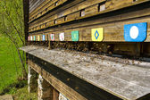 Bees (apiformes) flying into a beehive — Stock Photo