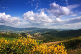 Landscape le Marche, Italy — Stock Photo
