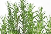 Rosemary (Rosmarinus officinalis) — Stock Photo