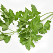 Twig of fresh parsley on white background — Stock Photo