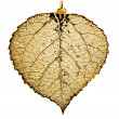 Aspen leaf necklace in gold — Stock Photo