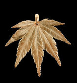 Maple in gold — Stock Photo