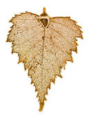 Birch leaf plated in gold — Stock Photo