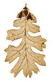 Oak leaf in fine gold — Stock Photo