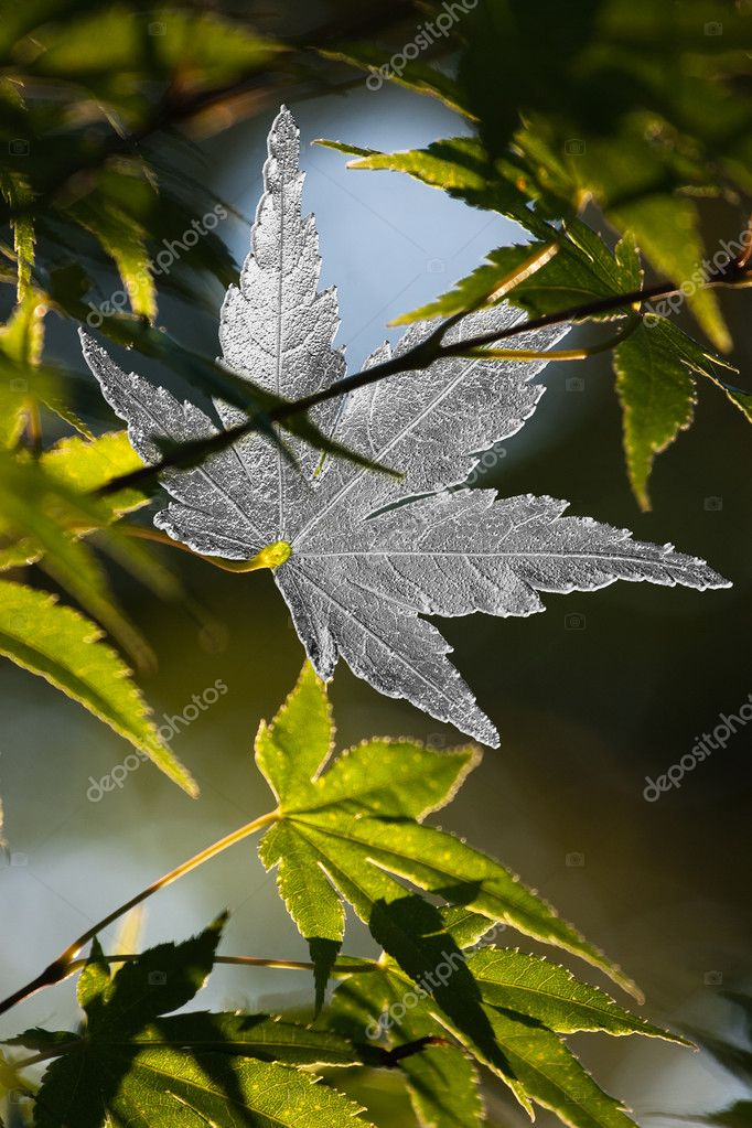 Photograph of leaves jewels on nature background. — Stock Photo #9229556