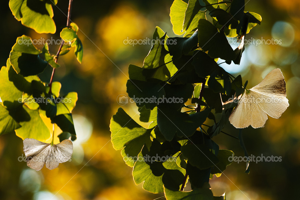 Photograph of leaves jewels on nature background. — Stock Photo #9229560