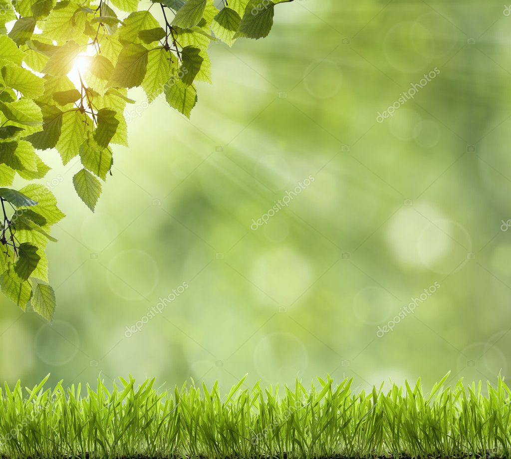 Боке фон зеленый 6