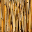 Cane dry, as a background - Stock Photo