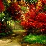 Trees in autumn park — Stock Photo #9245845