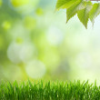 Natural green background with selective focus — Stock Photo #9246313