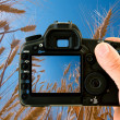 Photographing on the nature - Stock Photo