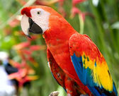 Parrot in jungle. Island Bali — Stock Photo