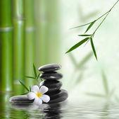 Imagem fina de bambu diferente, fundo de natureza — Foto Stock