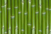 Green background of fresh hard chinese bamboo — Stock Photo
