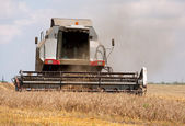 Grain harvester combine in the field — Stock Photo