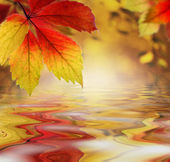 Autumn leaves above the water as a backdrop — Stock Photo