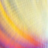 Cockleshell close up. Illumination with a bottom — Stock Photo