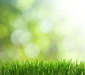 Natürlichen grünen hintergrund mit tiefenschärfe — Stockfoto