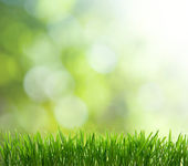 Přírodní zelené pozadí s selektivní zaměření — Stock fotografie
