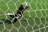 The goalkeeper on a football ground — Stock Photo