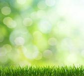 Wiosną w tle — Zdjęcie stockowe