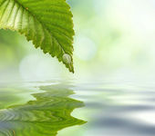 Green leaf reflecting in river water, closeup. Copyspace. — Stock Photo