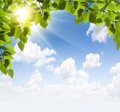 Sun beams and green leaves — Stock Photo
