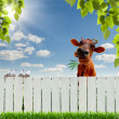 Cow with marijuana over the fence - Stock Photo