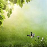 Våren bakgrund tidigt på morgonen med en fjäril — Stockfoto