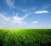 草と空 — ストック写真