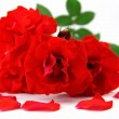 Stock Photo: Red rose and rose petals