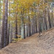 Tejera Negra beech forest - Stock Photo
