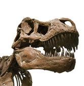 Tyrannosaurus rex — Stock Photo