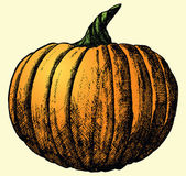 Pumpkin Sketch — Stock Vector