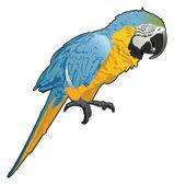Vector Parrot — Stock Vector