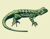 Lizard vector — Stok Vektör