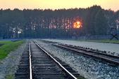 Auschwitz Birkenau — Stock Photo