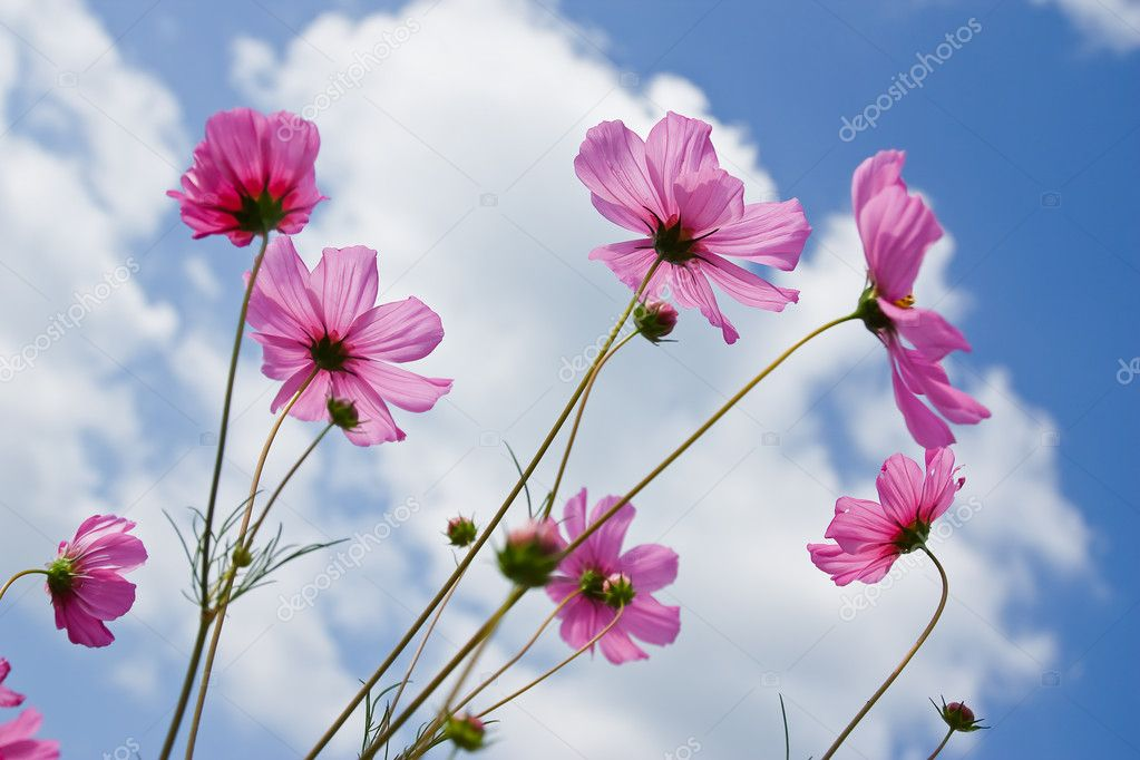 Beautiful flowers  Stock Photo #10291589