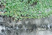 V trávě na zdi — Stock fotografie